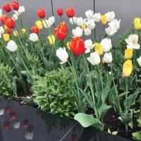 Цветочный бордюр ... :: Лариса Корж