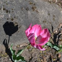 Цветок и камень. :: zoja