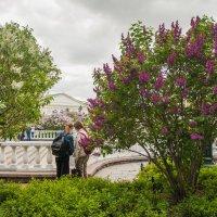 Воскресная прогулка по Александровскому саду :: Nyusha .