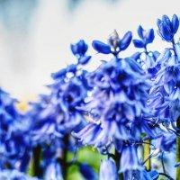 Цветы у дома :: Ciprian Pascal