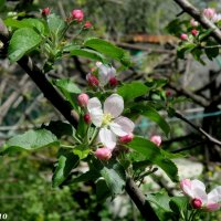 Донская весна :: Нина Бутко