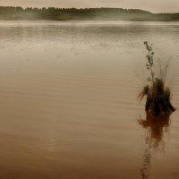затонувший, но не сдавшийся... :: Сергей Бойцов