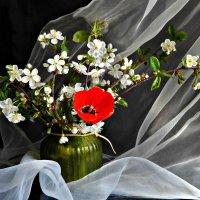 Праздничный май. :: ЛЮБОВЬ ВИТТ