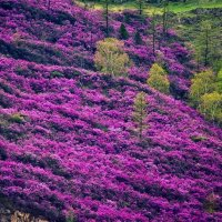 Весна на Алтае. :: Маргарита ( Марта ) Дрожжина