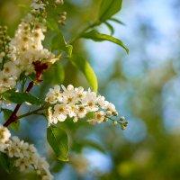 Мгновения летней весны ☀ :: Владислав Левашов