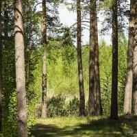 В весеннем лесу... :: ТатьянА А...