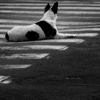 черное-белое :: Taras Oreshnikov