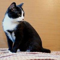 кот из приюта для домашних животных :: Dmitry i Mary S