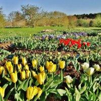 Клумба ботанического сада. :: Aida10