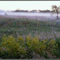 Росное утро :: Геннадий Худолеев