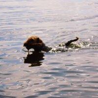 умный щенок :: ольга хакимова