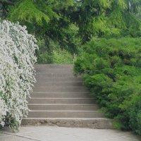 Лестница в саду :: Александр Рыжов