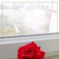 just a rose :: maxim