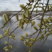 Вода прибывает :: Anna Ivanova