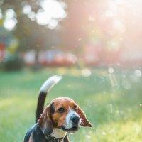 doggy_3 :: Trage