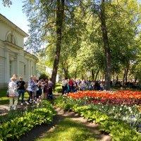 Очередь за тем, чтобы сфотографировать тюльпаны. :: Светлана Калмыкова