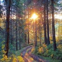 Рассвет в лесу :: Алексей Сметкин
