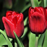 Весна на Елагином острове... :: Евгений Яхим