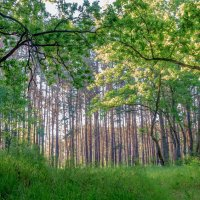 Утром в лесу... :: Юрий Стародубцев