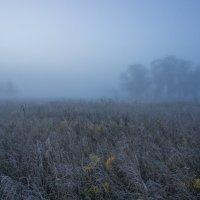 Туманно-инеевый рассвет. :: Igor Andreev