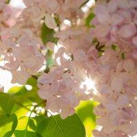 Весна :: Дмитрий Рожков