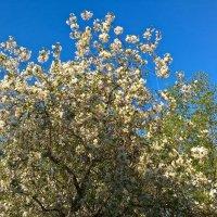 Весна :: Митя Дмитрий Митя