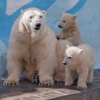 Медвежья семейка :: Владимир Габов