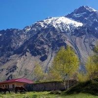 Весна в горах :: Наталья (D.Nat@lia)