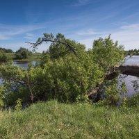 Майским днём на реке Дубне. :: Виктор Евстратов