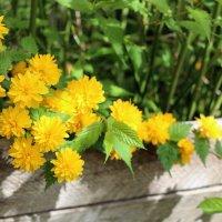 Весна в золотом :: Ольга