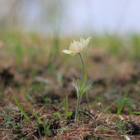 Сказочный цветок :: Владилен Панченко