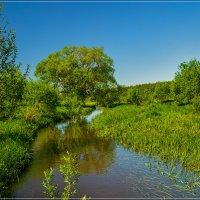 18 мая 2019, река Дрезна :: Андрей Дворников