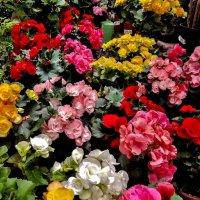 Просто так-цветов вам! для настроения!!! :: Осень