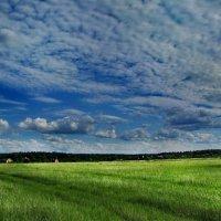Весенний колорит :: Лара Симонова