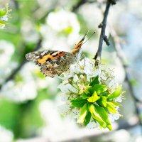 Весна :: Роман никандров