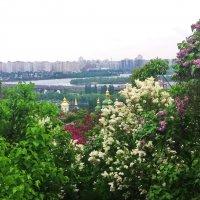Киевские пейзажи :: tina kulikowa