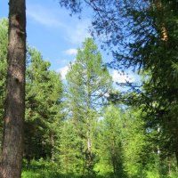 Хоршо в лесу! :: Вера Щукина