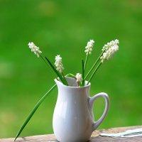 Мускарики - цветы весенние! :: Наталья Казанцева