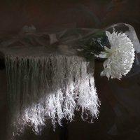 белая хризантема :: Viacheslav Krasnoperov