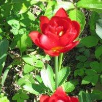 Два аленьких цветочка :: Дмитрий Никитин