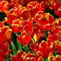 Весна! :: Евгений Яхим