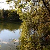 Lake and tree :: Nikola Ivanovski