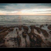 На брег песчаный и пустой... :: алексей афанасьев