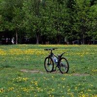 Я буду долго гнать велосипед :: Аквариус Yfnybr