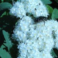 Жук на цветке :: Татьяна Са