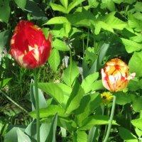 Два цветочка :: Дмитрий Никитин