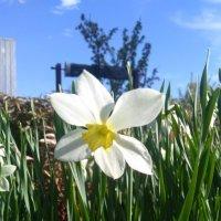 цветок :: ЕР