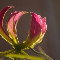 Орхидея :: Дмитрий Сиялов