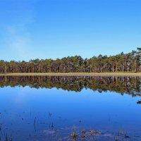 Пейзажи майского леса :: Татьянка *