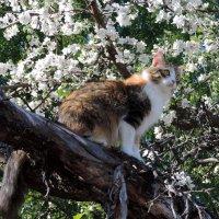 Расцветали яблони... :: Елена Якушина